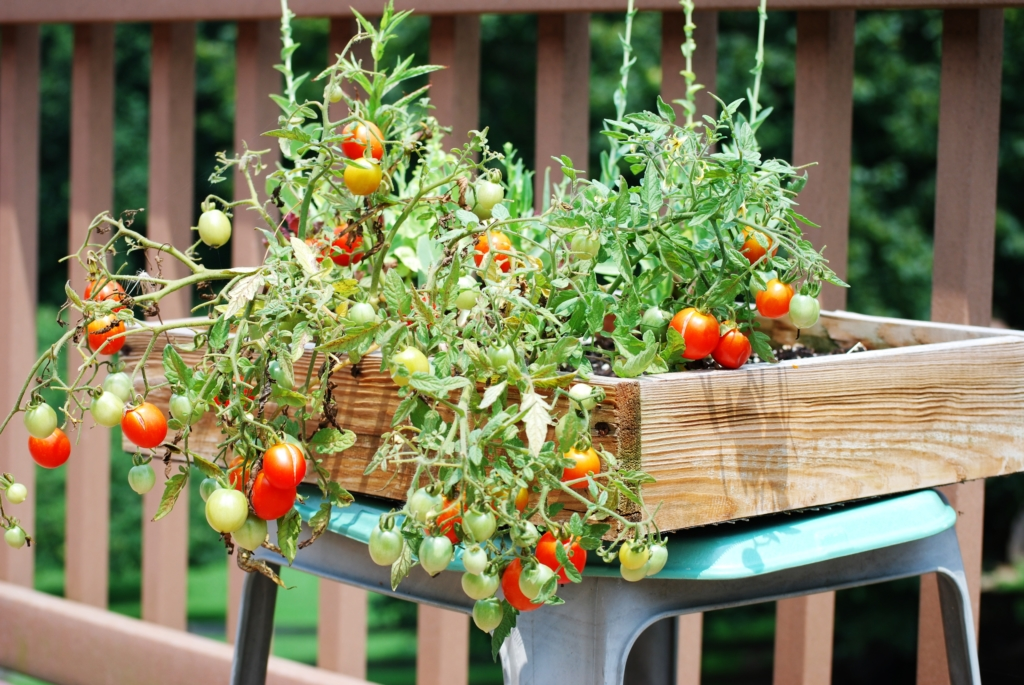 Easy Produce to Grow In Your Garden